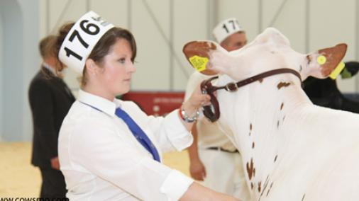 Sterndale Holsteins at the Dairy Expo, Carlisle 2012